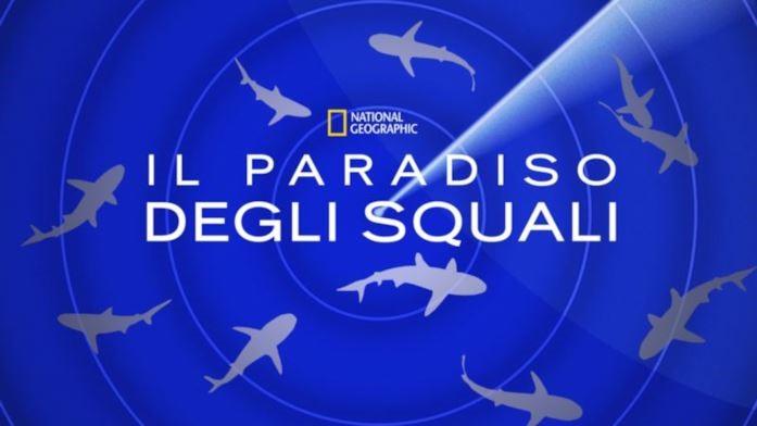 disney il paradiso degli squali